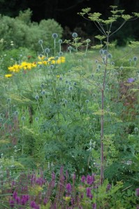 Perennial Meadow Summer-10
